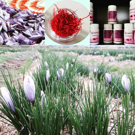 Support local businesses when you come to stay in the Teviot Valley. Book a night in our cabin and we can organise a visit to Wynyard Estate Saffron farm.  The colours of the flowers and saffron are so vibrant! Learn other uses for saffron other than colouring your rice